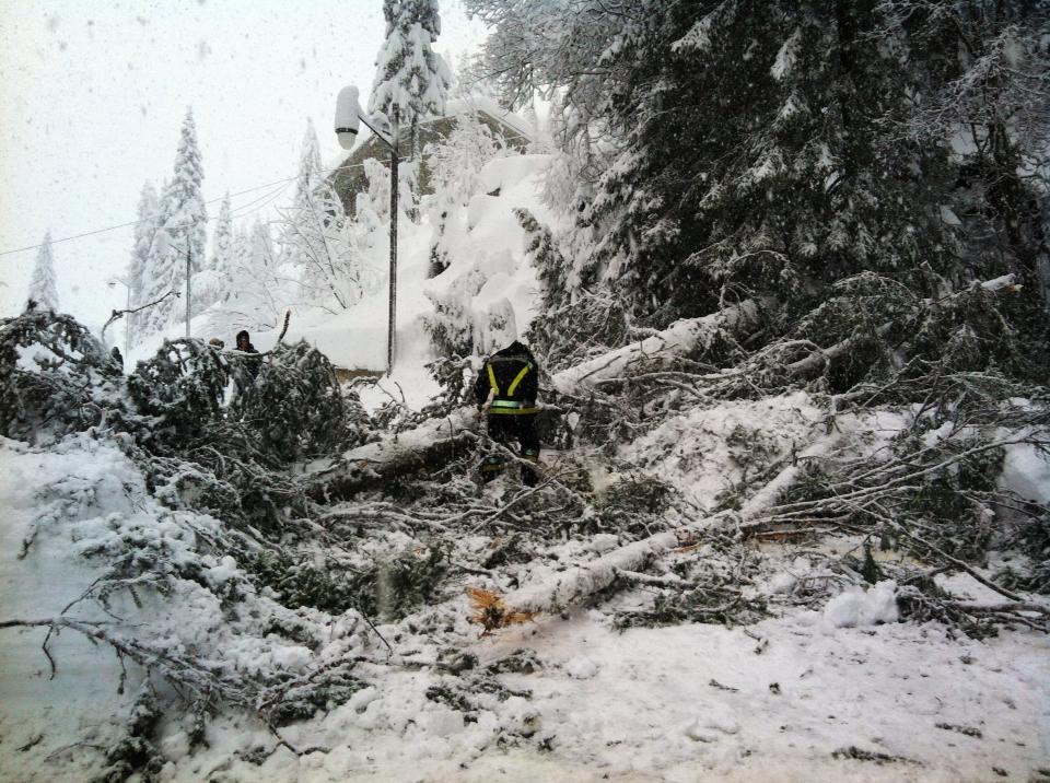 neve caduta piante