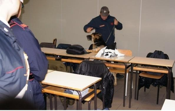 Foto cani scuola