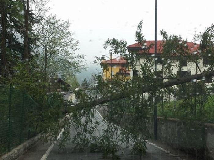 ponte legno caduta albero