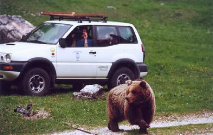 trento orso Daniza 1
