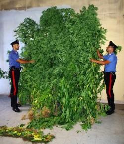 foto breno carabinieri serra marijuana
