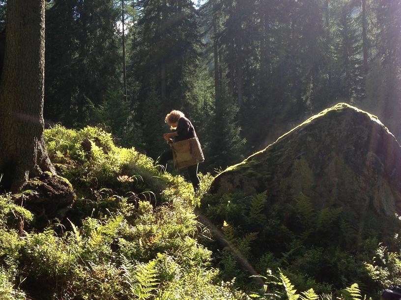 boschi trentino madonna di campiglio