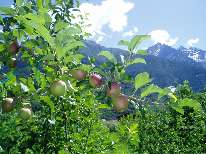 mele Valle Camonica1