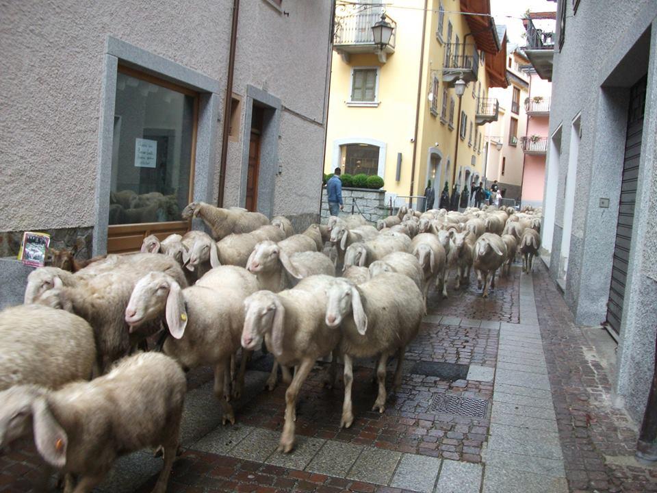 pecore ponte 2 (2)