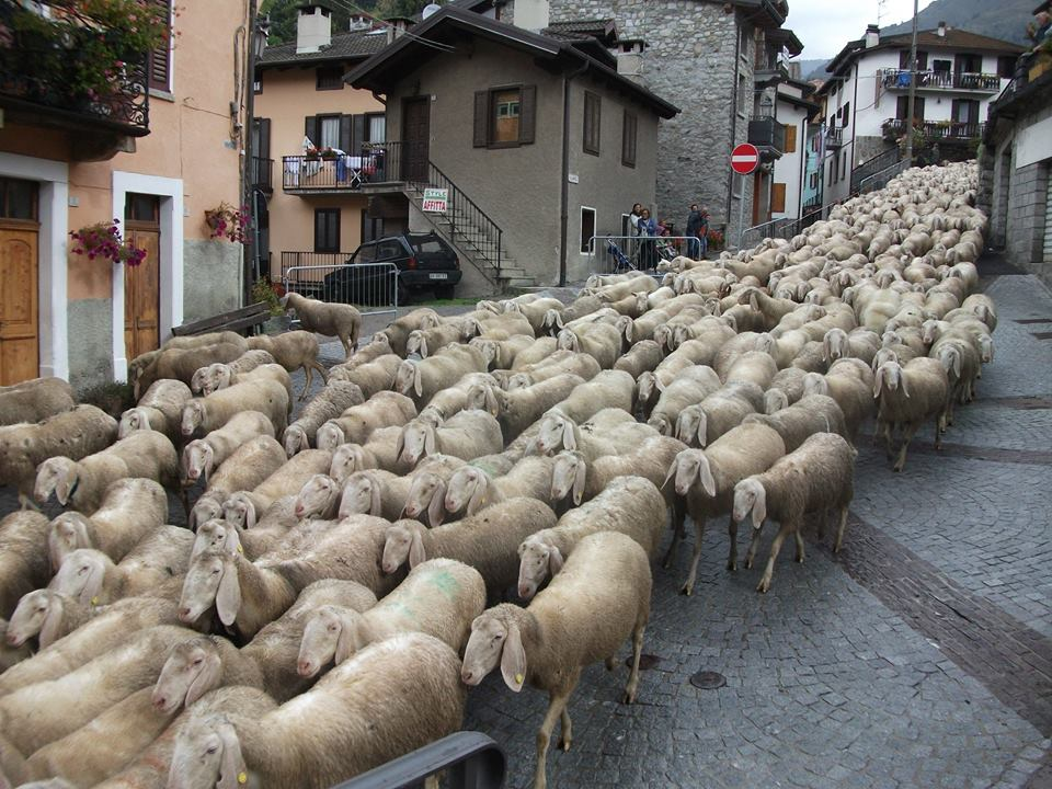 pecore ponte 4 (2)