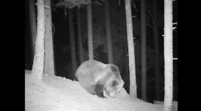 orso cuccioli