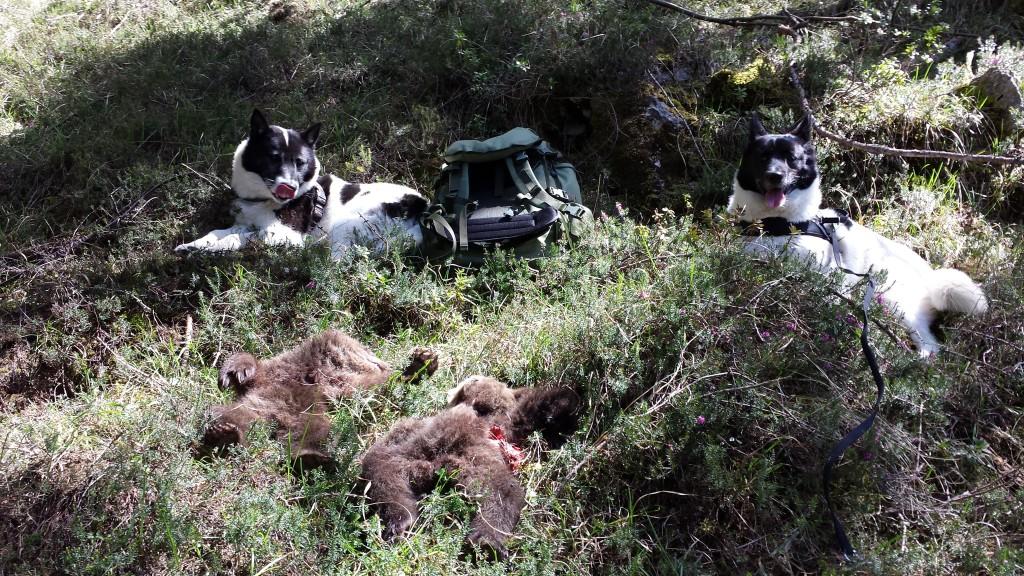cani orsetti uccisi morti