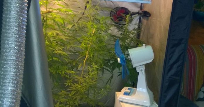 cannabis bleggio 1