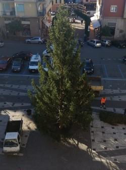 albero Recco 01