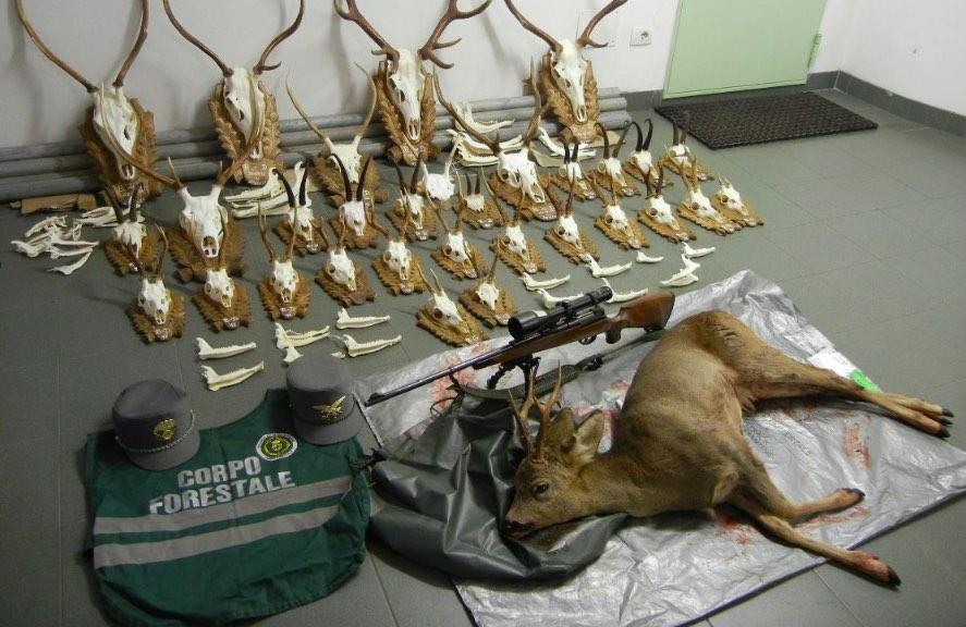 trofei caccia corpo forestale cervi camosci