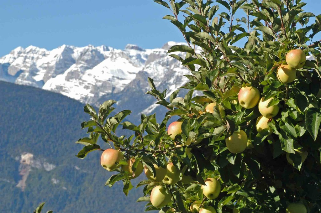 mele melinda montagne trentino