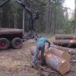 tronchi alberi