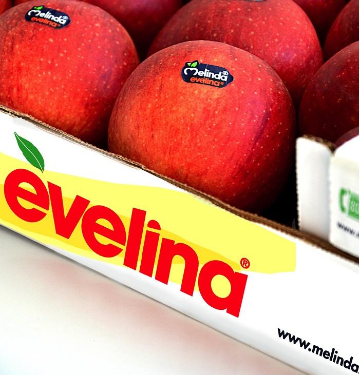 Melinda Evelina 2