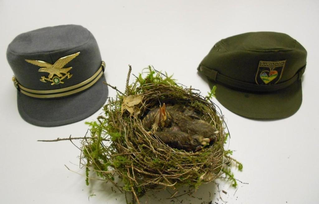 nido di tordo bottaccio nidiacei forestale