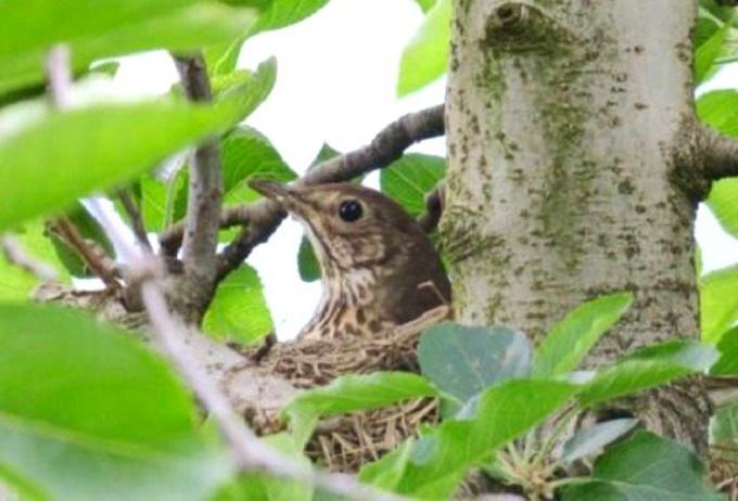 uccelli - furti nidi 1