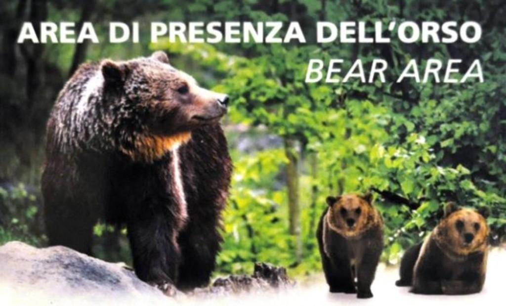 area orso