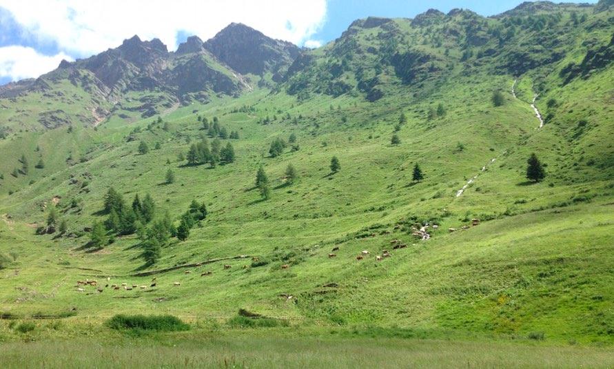 pascoli paesaggio montagna alpeggi