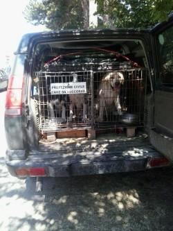 cani soccorritori foto usp