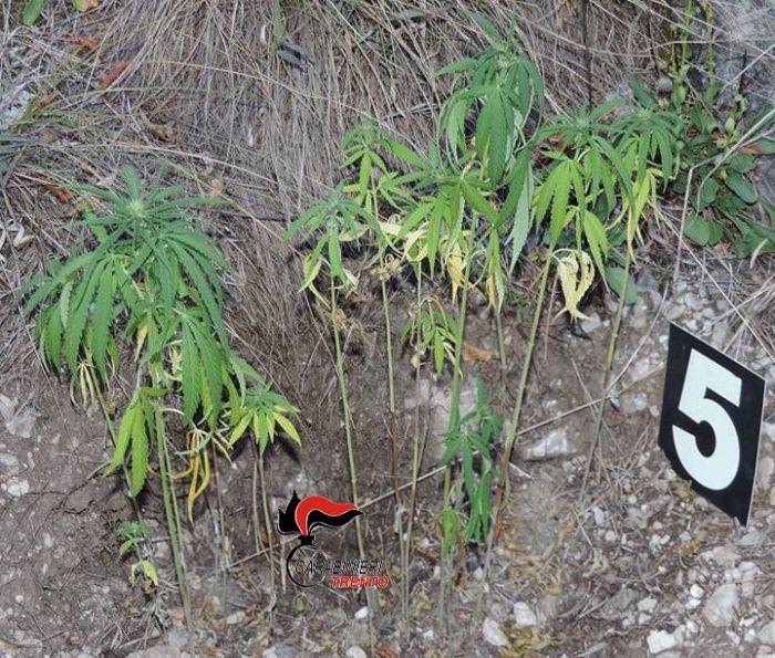 trento droga carabinieri 1