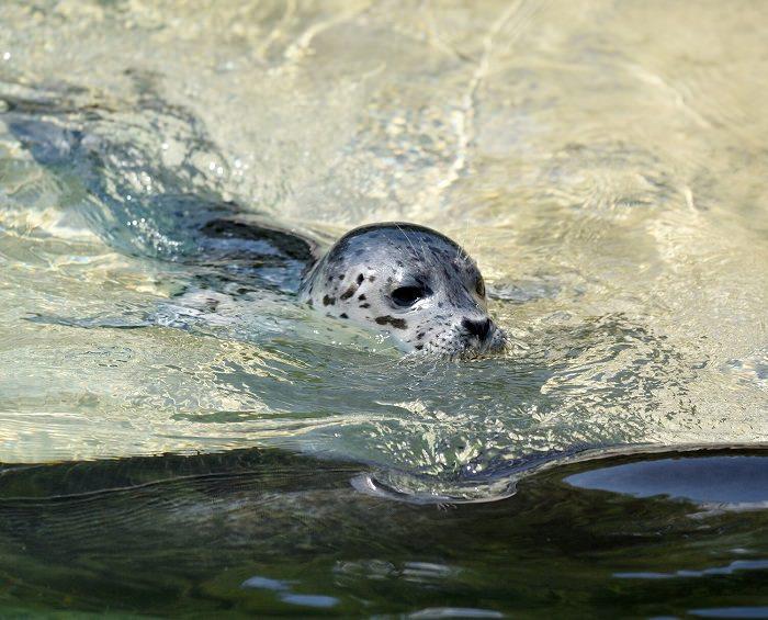 Le Cornelle foche 1