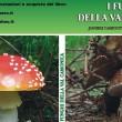 funghi Camiciotti Restocchi 0