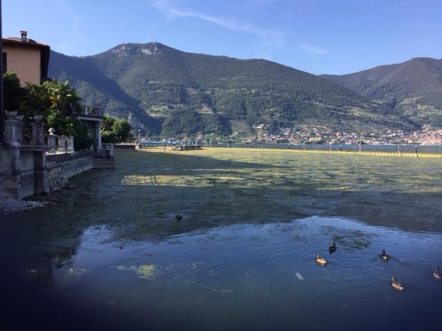 Alghe davanti alla piazzetta di Clusane