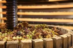 DiVinNosiola, quando il vino si fa santo: programma eventi