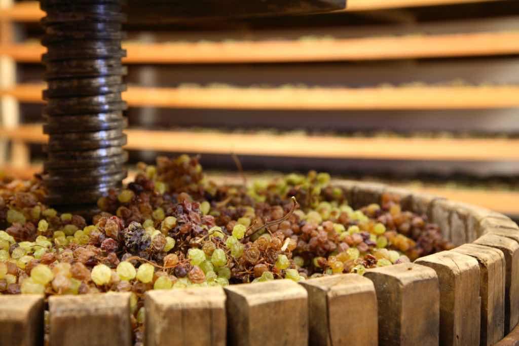 Vino Santo in occasione della prima spremitura durante la Settimana Santa presso la  Cantina di Toblino presso le Sarche, arelle, graticci dove viene fatta appassire l'uva appassita Nosiola, torchio,  Trentino