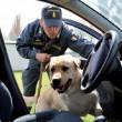Finanza - cane - operazione