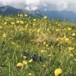 fiori - montagna 1