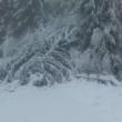 neve piante cadute