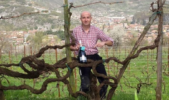 Alex Berlingheri vino