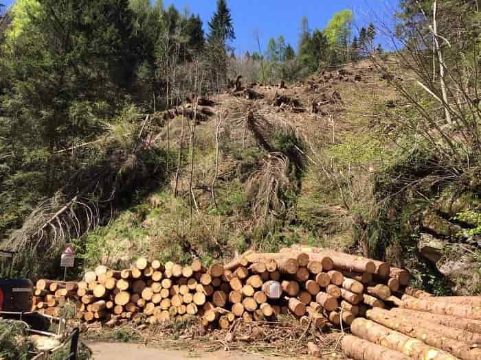 Interventi - Consorzi Forestali