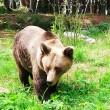 orsa orso aprica