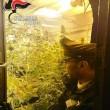 Lozio - marijuana