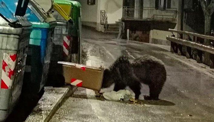 orso archivio pat