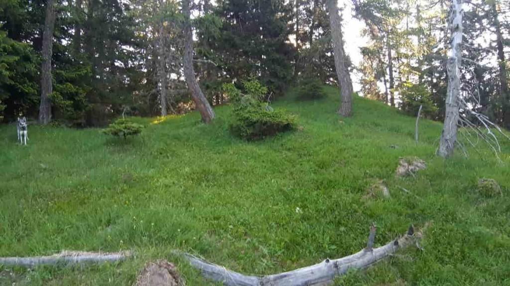 Monte Peller - orso - credit Pat