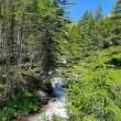 ruscello montagna natura verde estate sole