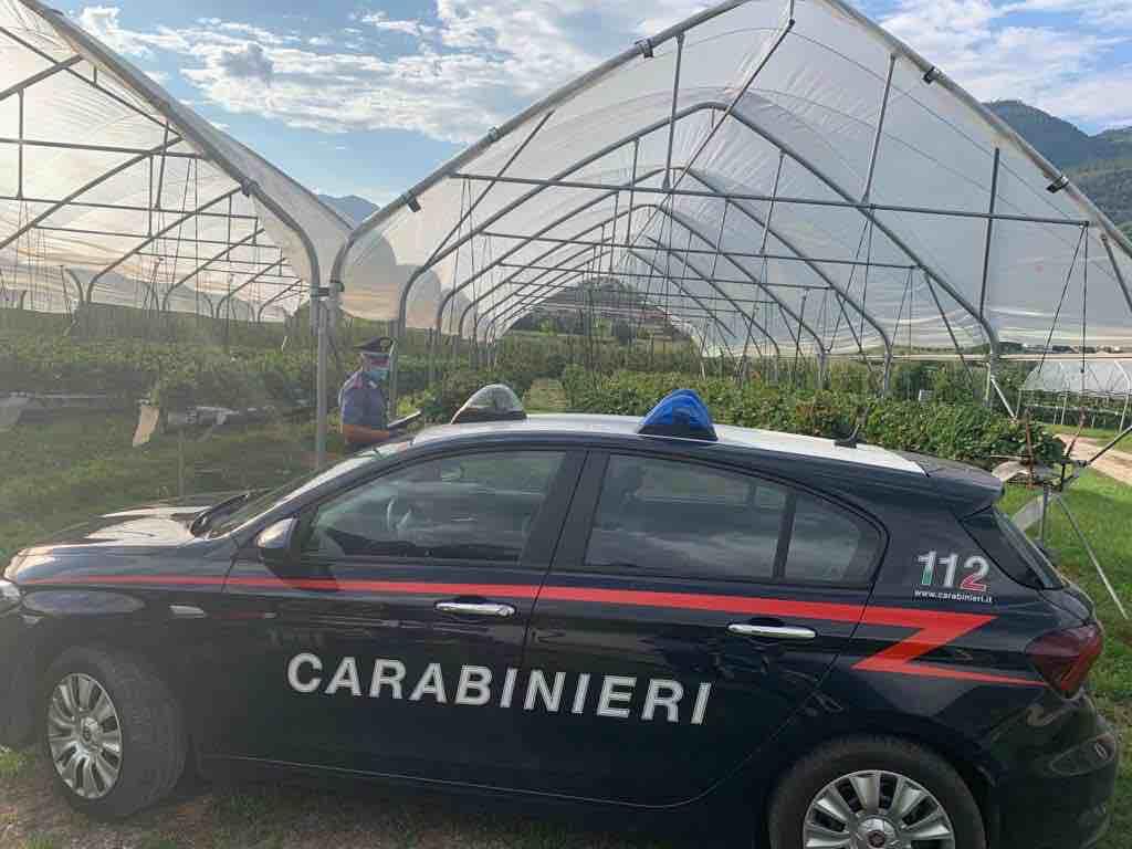 carabinieri serra agricoltura