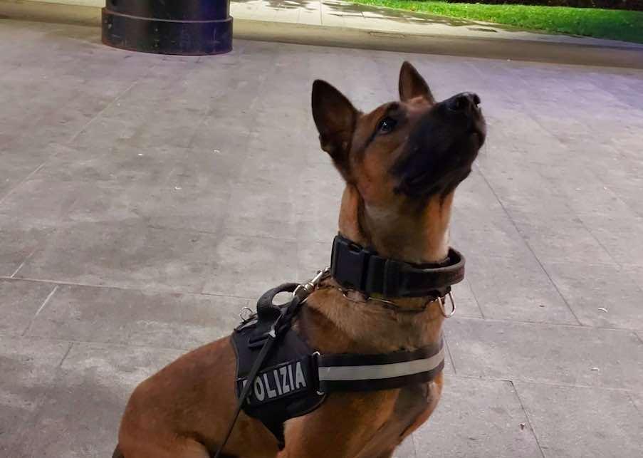 polizia cane antidroga
