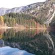 fem lago tovel